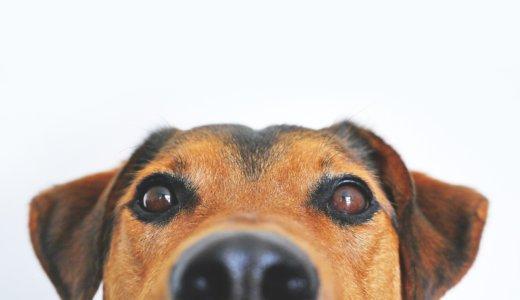 鼻中隔湾曲症の手術で後遺症は?術後の体験をメキシコのブログで!